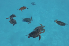 Exposition Tortues & Thalasso 2.0