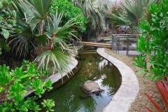 Espace extérieur des tortues éléphantines (crédit photo : Damien Vidal)