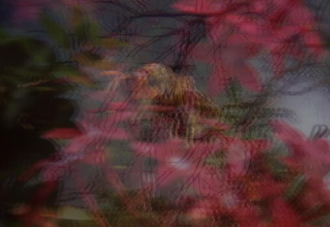 Série_Domestique_Guêpe_2008_Photographie_impression_Ultrachrome_sur_Luster_collection_musée_Nicéphore_Niépce